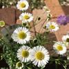 花壇に植える花を購入!