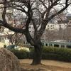大井町④ー大森貝塚遺跡庭園
