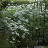 欲張りな庭に・・・&バラ達 3