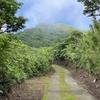 八丈島・青ヶ島(3) 崩壊の爪痕と青酎