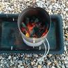 備長炭 火起こし方法のコツは煙突効果?実践してみた結果は