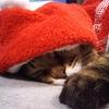今更ながらココちゃん&たまちゃんのクリスマスコスプレ♪サンタさんとトナカイさんだぞ~♪