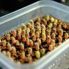【多肉植物】ギムノカリキウム 海王丸さんの実生 4ヶ月が経過