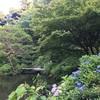 水辺の紫陽花(甘泉園公園)