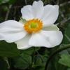 白花の秋の山野草