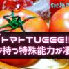 「トマトTUEEE!!」トマトが持つ特殊能力が凄かった!