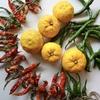 【ベランダ菜園】唐辛子を収穫。とうがらしリース作り!