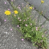 草むしりのタイミング・・・杉島ブログです。