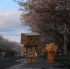 松前町 住宅街の中で輝いていた桜並木路