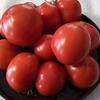 トマトが届き、季節がまわりはじめる