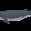 ノアコイン、クジラが住む通貨は送金に適さない