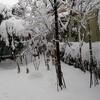 降雪30cm程度