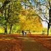日曜、秋晴れの公園にて。