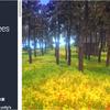 uNature - GPU Grass and Interactable Trees Terrainのペイント感覚で「草や木」を配置して、草木まみれでも爆速でレンダリングしてくれるスクリプト