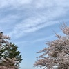 冬を越えて来た桜~さくラン~