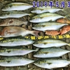 5月に日本海で釣れる魚👆 【  ボートゲーム / 釣魚のまとめページ  】 ※順次更新中