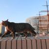 10月後半の #ねこ #cat #猫 その4