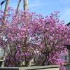 えぃじーちゃんのぶらり旅ブログ~コロナで巣ごもり 北海道石狩市の春編 20210417