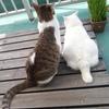 今日の猫達