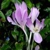 野菊・「ノコンギク(野紺菊)」に季節の移ろいが…。