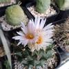 トリプル開花