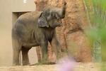 夏の円山動物園で、アジアゾウやレッサーパンダたちに会ってきたよ。