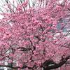 神社と握手とお別れと(2017年3月25日~26日)