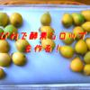 【初めての挑戦】びわで酵素シロップを作る【材料2つ、砂糖とフルーツ+容器だけ!】