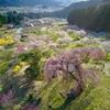 弁天さんのしだれ桜(exp.3902min)