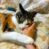 【愛猫日記】毎日アンヌさん#153