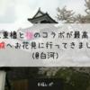【お花見2018】三重櫓と桜のコラボが最高!小峰城へお花見に行ってきました!(@白河)