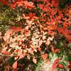 神戸市立森林植物園で紅葉散策してきた