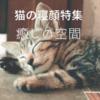 【癒しを求めて】猫の可愛い寝顔特集21選