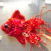 小さな金魚たち 〜刺繍〜