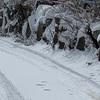 雪中ゴミ捨て決死隊