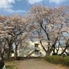吉高の大桜  印西