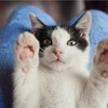 猫の落下事故12月の定期検査の報告について