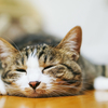 猫の寝相から分かる性格の違いとは?