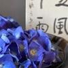 水無月…紫陽花フェア開催中です。