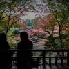 【176】国分寺市南町 赤く染まる殿ヶ谷戸庭園