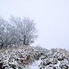 寒風山から笹ヶ峰へ ― 厳冬期とはとても思えぬ寡雪の稜線を行く