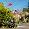 春が来たシーズン2
