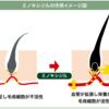 ミノキシジル系発毛剤が育毛市場で活性化の予感