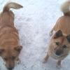 保護犬テレサと幸吉の近況動画