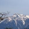 八ヶ岳南麓のコゲラ