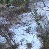 闘病中に雪が降っていたんですね