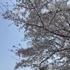恐怖のお花見 3 当日編