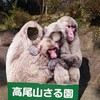 高尾山・さる園とはどんなところ? 高尾山に行ってきました【その2】
