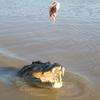 NT ダーウィンに行ってきました!ロックダウンになりました。。。🐊その2【Litchfield National Park Tour】