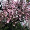2020-03-29 やっと東京の初雪
